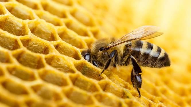 """Grootste studie ooit stelt vast: """"Bijen sterven door pesticiden"""""""