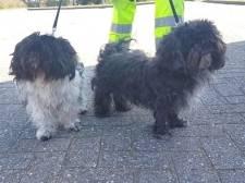 Twee 'niet al te frisse' hondjes vastgebonden aan lantaarnpaal in Zwolle