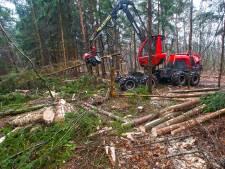 Massale bomenkap bosgebied Hurkske zorgt voor grote irritatie: 'Pure afbraak van de natuur'