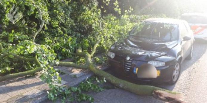 De auto aan de Talmaweg raakte flink beschadigd door de tak.