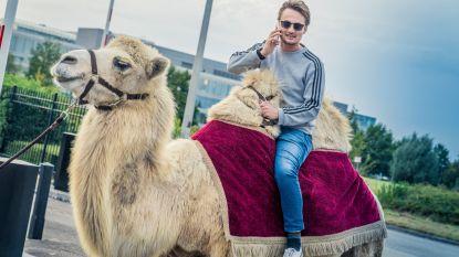 Poets wederom poets: Maarten van Qmusic moet met een kameel naar huis