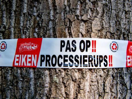 Gemeente Westland bindt strijd aan met eikenprocessierups: vanaf dinsdag controle
