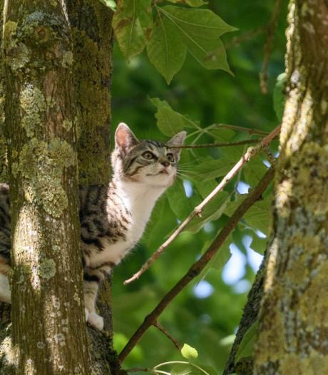 Huisbaas ontsteekt in woede nadat huurster (20) zijn kat laat ontsnappen