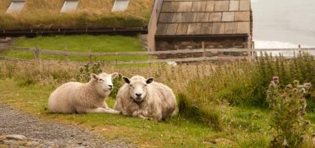 Tout plaquer et devenir berger sur une île écossaise