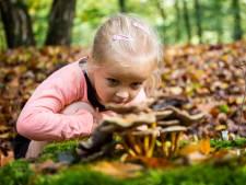 Wat gaan we doen in de herfstvakantie? Zeven coronaproof tips in Rivierenland