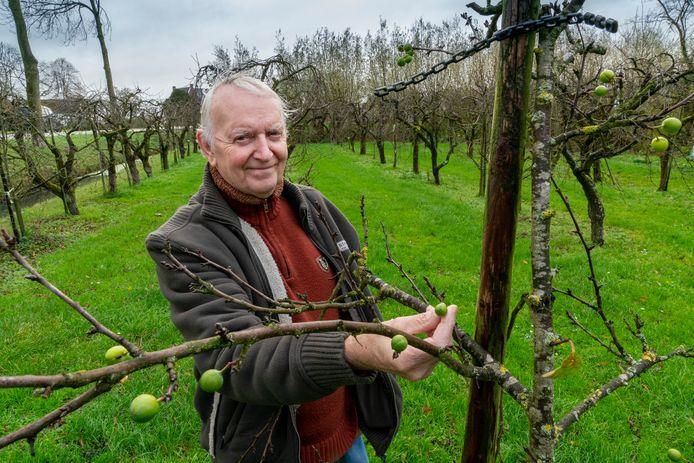 Henk van der Heijden in zijn boomgaard in Bruchem.