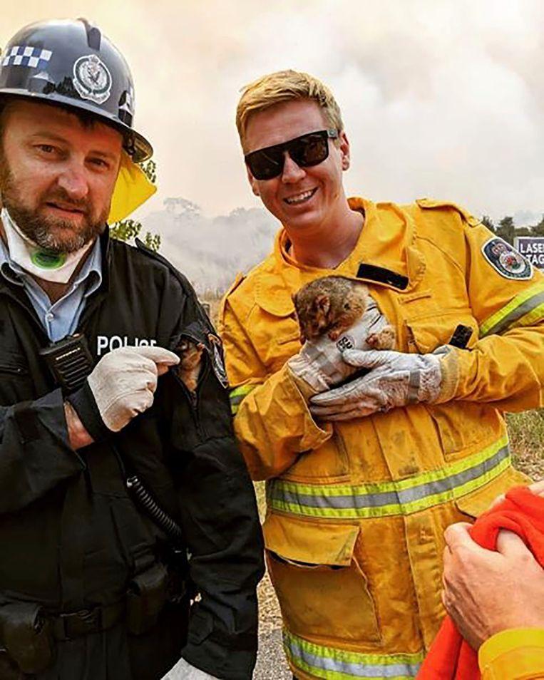 Een possum en haar baby konden door de brandweer van New South Wales gered worden.