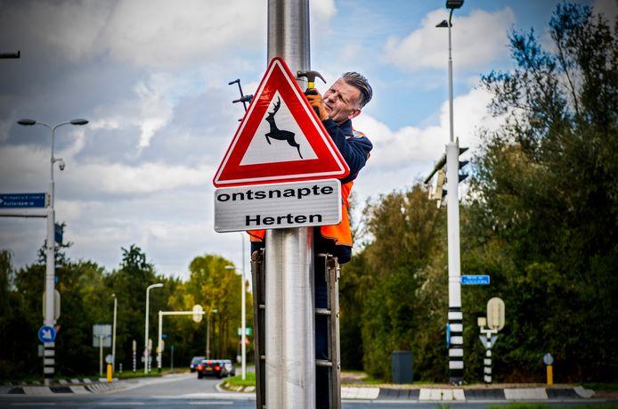 De gemeente plaatste eerder borden bij de Abram van Rijckevorselweg om automobilisten te waarschuwen voor de vier ontsnapte hertjes.