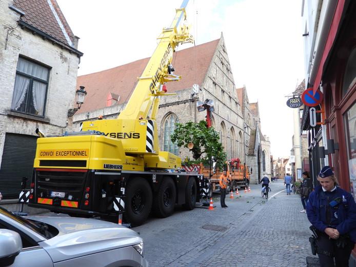 Boom uit reien gehaald Brugge