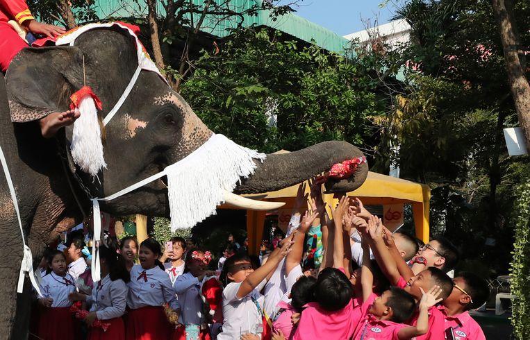 Niet de kerstman en zijn rendieren brachten pakjes rond, maar wel vier olifanten gekleed in een vrolijke kerstoutfit.