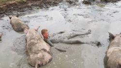 """""""Echt lekker koel"""": Jeroen snapt nu waarom varkens graag in de modder liggen"""