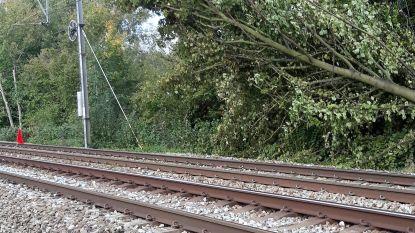 Treinverkeer tussen Landen en Tienen verstoord nadat boom op bovenleiding valt