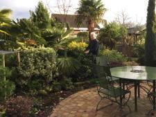 Tuin van Kees staat vol met palmbomen en yucca's voor een exotisch tintje