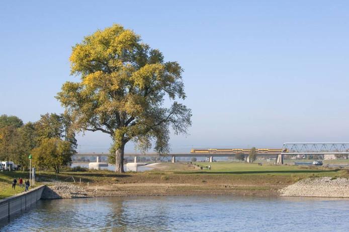 Deze imposante populier is de favoriete herfstboom van Bert van Marwijk.