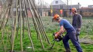 Natuurpunt bouwt wilgentipi's aan Depot Deluxe