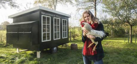 Haaksbergse begint proef met kippen op natuurweide