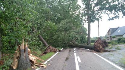 Eikelbosstraat (N747) tijdelijk afgesloten door stormschade