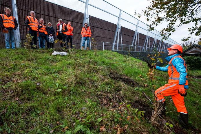 Een medewerker van Natuur & Ruimte laat zien hoe hij een duizendknoop uit het talud steekt.