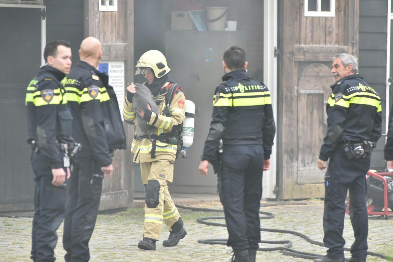 sex in zwijndrecht gratis neuken gelderland