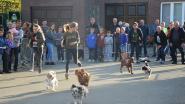 Honden van groot tot klein welkom op 94ste ludieke hondenkoers
