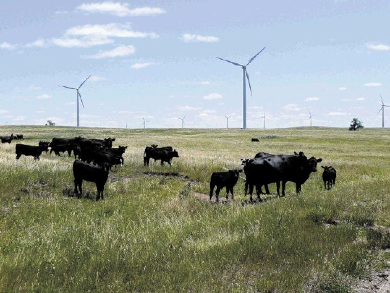 De constante, sterke windkracht zoals gemeten in North Dakota verblufte een windenergiebedrijf. In theorie kan de staat in een kwart van de Amerikaanse energievraag voldoen. (FOTO AFP) Beeld