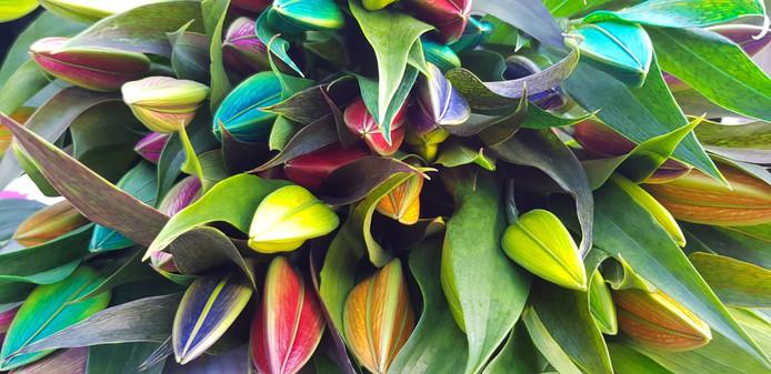 De regenbooglelies van Marc Noordam zijn gigantisch populair.