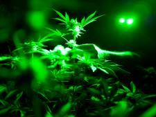 Saisie record de plus d'une tonne de cannabis à Grâce-Hollogne