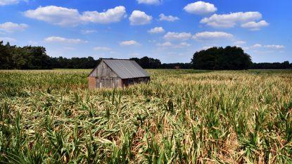 Open Vld eist snelle erkenning van droogte als ramp
