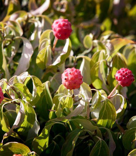 Waarom je nú aan het planten moet slaan: 'ik zeg plant erin, kerstbal eruit'