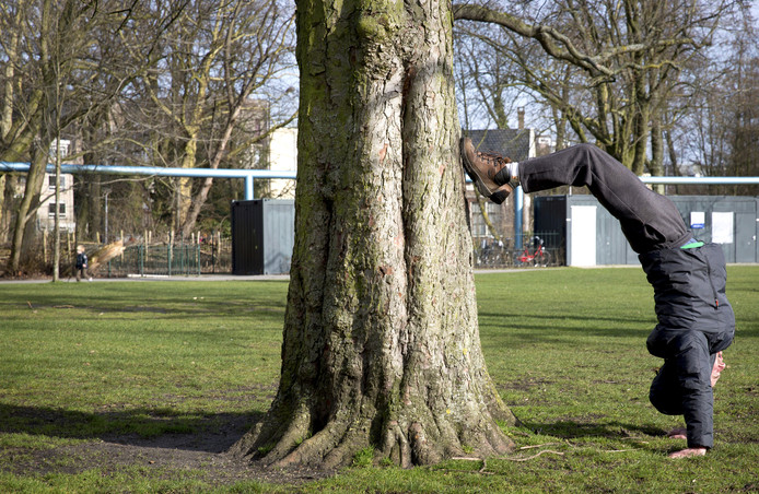 Een jongen doet een handstand tegen een boom in het Vondelpark.