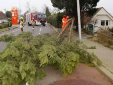 Boom op Veersedijk overleeft storm Dennis niet
