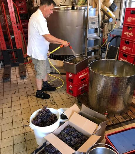 Hornse Heerlijkheid, het nieuwe druivenbier uit Kaatsheuvel is gebrouwen