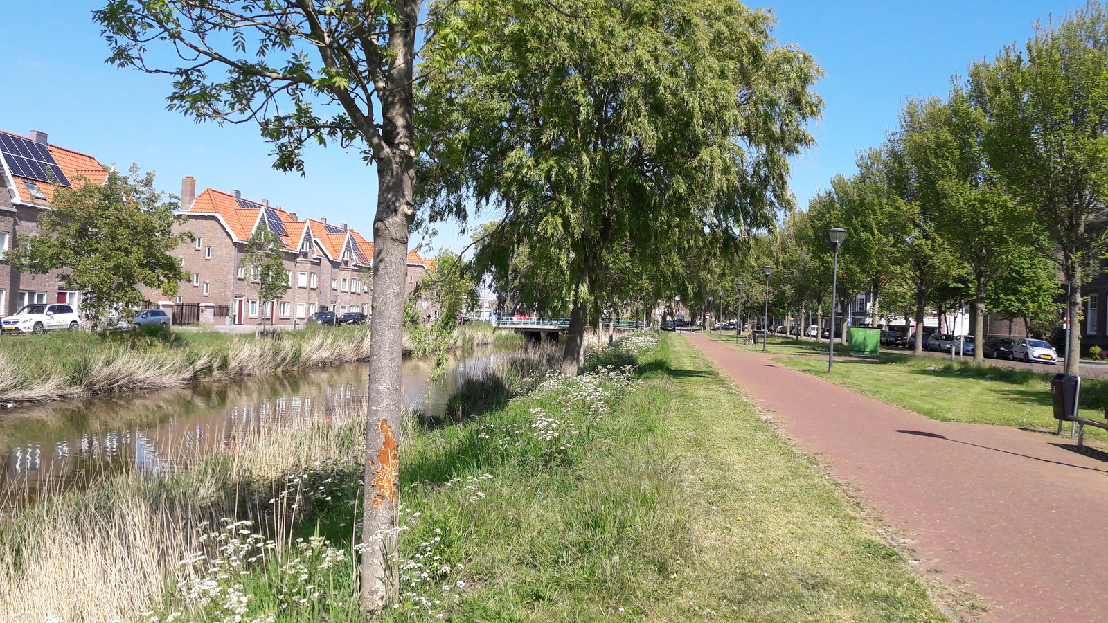 Een boom met vernielde bast aan de Singel ter hoogte van de voormalige katholieke kerk. Meer bomen in rijtjes langs het voetpad zijn flink beschadigd.