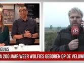 Veluws wolvenstel heeft welpjes geworpen