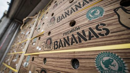 1.000 kilo cocaïne gevonden tussen bananen in haven van Antwerpen