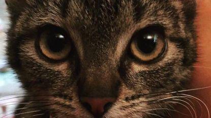 """Acht weken na brand is vermiste kat Molly terecht: """"Ons gezinnetje is weer compleet"""""""