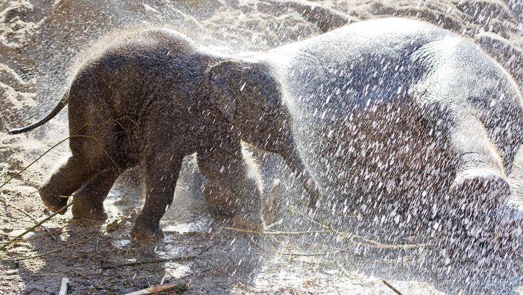 Babyolifantje Mumba, nu overleden, krijgt een verkoelende douche Beeld anp