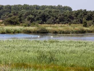 Natuurpunt Pelt nodigt uit om te komen helpen in het Hageven
