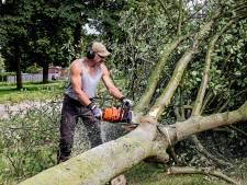 Twee 'gevaarlijke' bomen gekapt na controle van boomveiligheidscontroleur