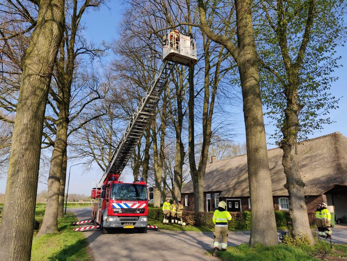 Brandweer en wethouder redden samen een kat uit de boom in Biezenmortel.