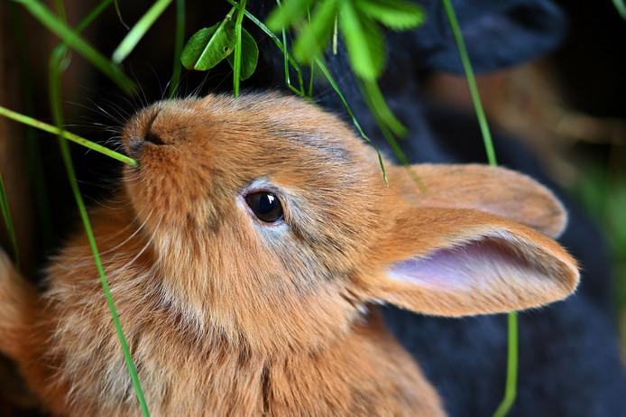 Foto ter illustratie, dit dier is niet ziek.