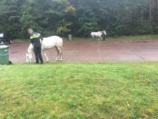 Losgebroken paarden 'carpoolen' langs A28 bij Nunspeet
