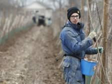 Pruimenteler Wim (23) is dolgelukkig tussen zijn 11.000 bomen