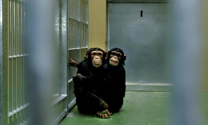 Archieffoto apen