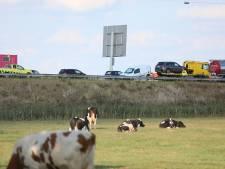 A12 Arnhem-Duitsland weer vrij na ongeval met meerdere auto's