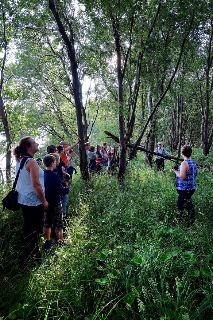 Voor dag en dauw op excursie door de indrukwekkende flora en fauna van de Dintelse Gorzen.
