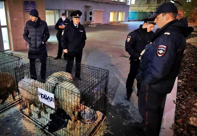 De schapen bij de redactie van Novaya Gazeta.