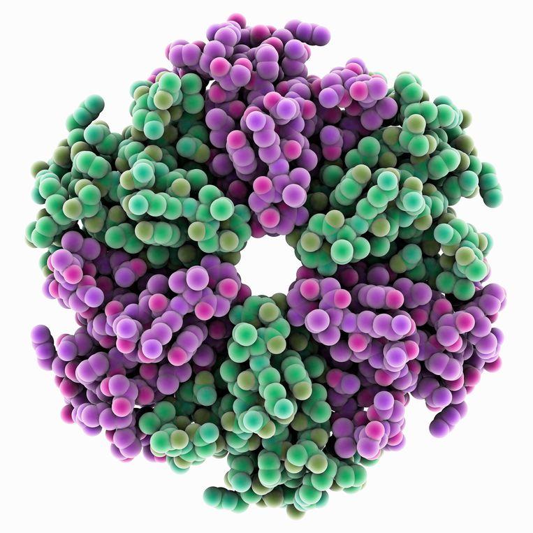 Een computertekening van het Hfq-eiwit in een E. Coli-bacterie. Door Delftse ingenieurs ontwikkelde technologie zou het  mogelijk maken om via een MRI-scan 3D-foto's te nemen van dit soort complexe moleculen. Beeld ANP