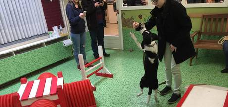 Dog's Got Talent: hard werken voor een snoepje