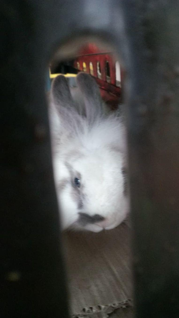 Het konijntje werd aan de Groendienst van Aalst afgezet.